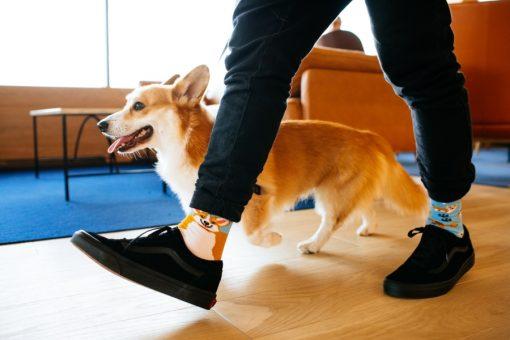 Hravý psík