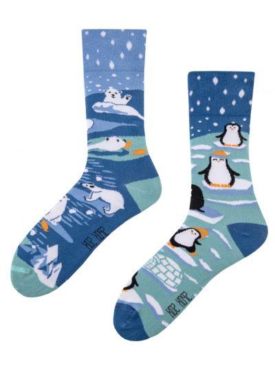 Tučniak a polárny maco